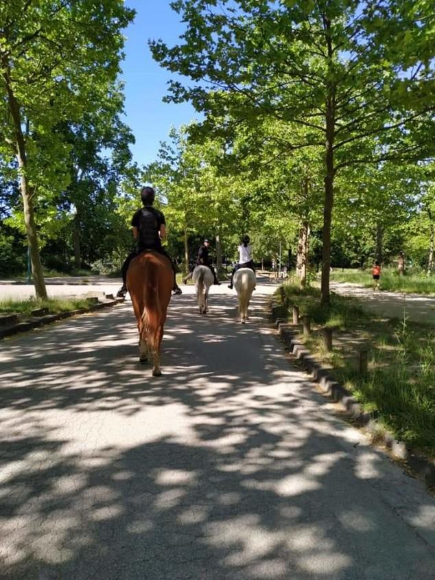 Endurance_bois